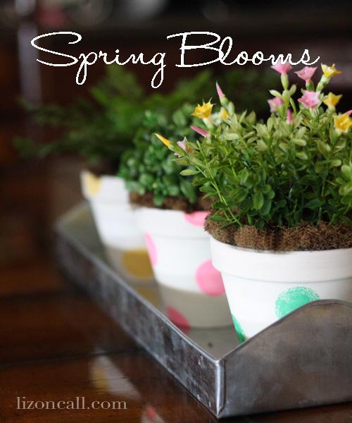 Spring Blooms 1