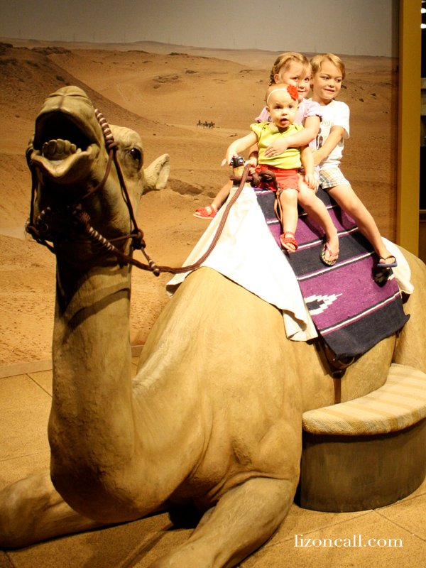 Lost Egypt exhibit at the AZ Science Center - ride a camel
