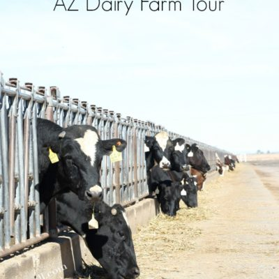 Arizona Dairy Farm Tour