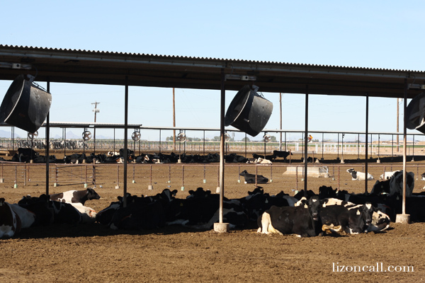 Where does our milk come from?  AZ Dairy Farm Tour - Liz on Call