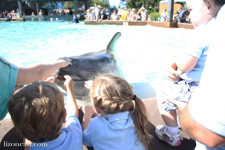 http://lizoncall.com/wp-content/uploads/2015/10/Sea-World-Tips-6.3.jpg