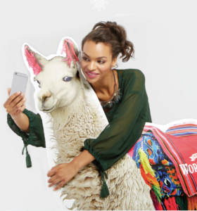 National Llama Day Celebration